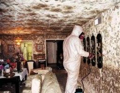 Mold mitigation ain't a pretty sight