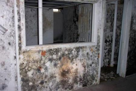 Mold can be rampant in your home
